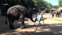 AMAZING - ELEPHANT DRAWING ELEPHANT