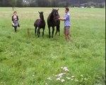 Totilas Foal / Colt / Fohlen / Hengstfohlen - www.sportpferde-angerer.at