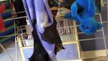 Orphaned baby bats on a clothes airer