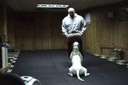 """Dog Training..AB """"RABBEYE"""" June 8th 2009"""
