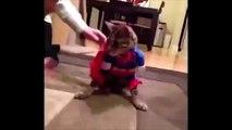 Funny Cats, Cute Cat Videos, Cats Funny Compilation & Смешные Кошки, Милые Кошки. Сборник Видео