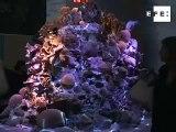 Berlín se sumerge entre corales en año internacional de arrecifes