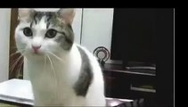 Catdance, cat funny, Kitty Cat Dance, cat dance so cute