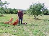 memoire  trois chiens trois rapport par chiens
