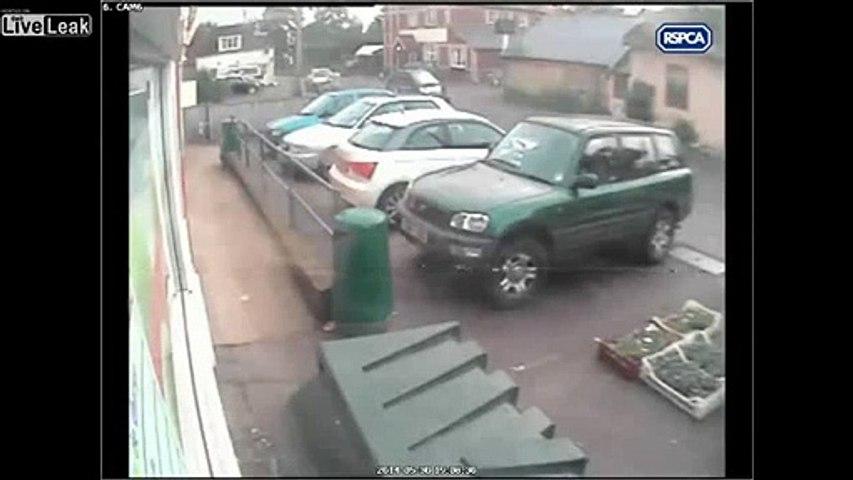 LiveLeak - Women viciously kicks her dog, escapes jail  sentence-copypasteads com