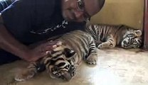 Animals Video - African Animals - A Man With Tiger -  Tiger Video - Baby Tigers - African Tiger