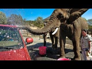 The Elephant Car Wash