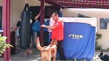Funny Dog Vidoes!