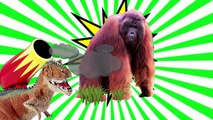 Animal Sounds for Children! Animals Sounds Real Animals! Learn Animal Sounds Animal Names and Sound