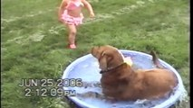 Dog Ruins Little Girls Rubber Duck Play Time - Try Not To Laugh - Videos animals funny