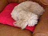 Ma chienne qui fais dodo