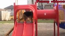 Funny Animals Jok s Animal Compilation Animals Funni st Vid o!!