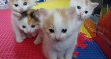 Adorable Kittens Perform Synchronized Head Dance