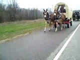 MULE DAY 2011 Events Wagon Train, Log Loading, Amazing Grace, Jack Pot Races..mp4