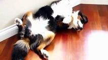 잠자는 고양이 Cat sleep with eyes open /cat videos /cute Cat/ funny cats compilation おかしい猫 엽기 동영