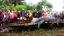 Giant crocodile | BIGGEST CROCODILE | LARGEST CROCODILE | HUGE CROCODILE