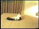Funny Cats Video Gag