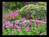 Flora Canaria II - Flora Kanaren II