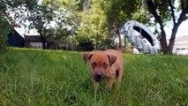 S & R Animal Rescue Ver.1.1 ~ Port Huron, Michigan (810) 937-7388