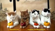 Funny Cats - Funny Cat Videos - Funny Animal Videos - Funny Dog - Funny Dogs and Cats
