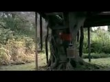 Airtel Tree House Advertisement. Birds and Tree Special 5 ad