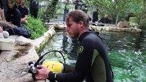 Hors-Série spécial lamantins : tous à l'eau pour sauver Mandilo ! Beauval, un œil en coulisse