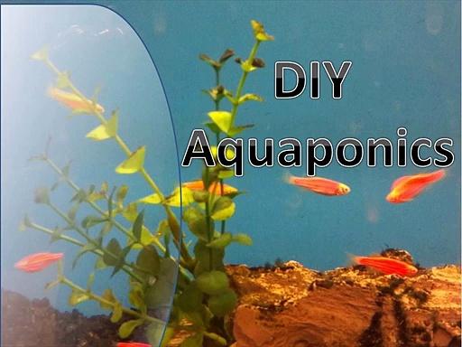 Aquaponic Systems
