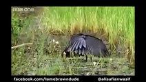 Punjabi Dubbing Birds