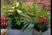 Mini-flores Santaflora no programa da Ione Borges - Parte 1