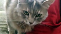 Trixie is a Cute Kitty - A Talkative Cat  (Kind of my kitties 5th Birthday Special)