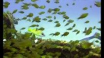 Dive Tug II Wreck Mauritius - Flic en Flac