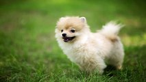 animals photos, animals pictures, baby puppies, bath cats and dogs home,