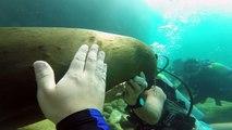 Sea Lions of Los Islotes, La Paz, Mexico 2014 - Aquarius Scuba