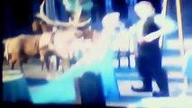 frozen febre congelante filme