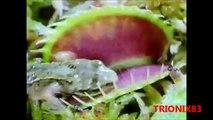 PLANTAS CARNIVORAS REALES, increibles y espectaculares plantas carnivoras, recopilacion