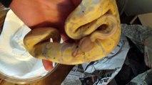 Bz Reptiles - Banana Ball Pythons and Jigsaw Ball Python unboxing