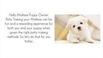 Maltese Dog Gagging - Kennel Cough? Reverse Sneeze? - video