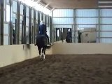 """CSB Dressage, """"Abigail L"""" dressage horse for sale, PSG/4th level"""