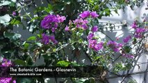 Beautiful Flowers & Plants In The Botanic Gardens - Glasnevi