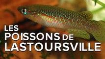 Interview : les curieux poissons des grottes de Lastoursville