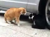 Red Cat est la preuve que le noir drôle chats chat [vidéos et les blagues méga fun rzhaka étain]
