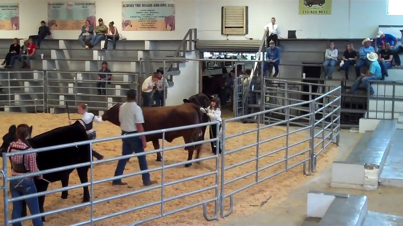 Cattle Show