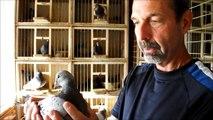 uzun mesafe Joe Richir tarafından güvercinleri yarışı - Yarış Güvercini / long distance racing pigeons by Joe Richir - Racing Pigeon