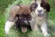 Best Animal Dog and Puppy - Funny Pets Videos