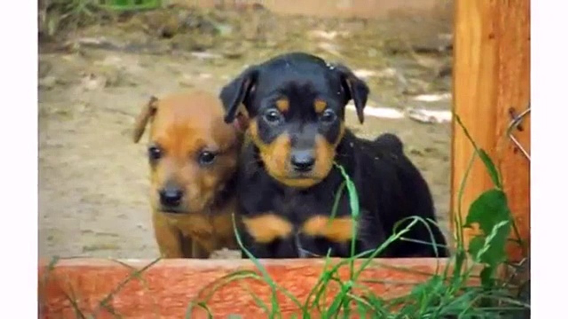 Cute Dogs And Puppies Compilation Funny Pets Videos Video Dailymotion