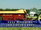 Leaf Mulching and Cover Crops from Vegetable Farmers and their Innovative Cover Cropping Techniques