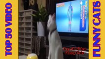 Funny Cat #2 - Funny Cats Compilation 2015 by Top 50 Video Funny Cats