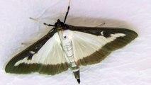 2014-08-22 Schmetterling, Butterfly, Bodenheim