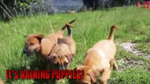 Puppies Galore! - This Will Make You Smile - Extremely Cute Homeless Puppies Looking For Adopters
