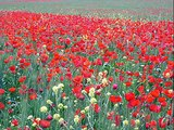 Vive la vie et vive le printemps...!